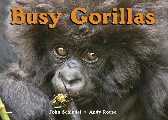 Busy Gorillas By Schindel, John/ Rouse, Andy (PHT)